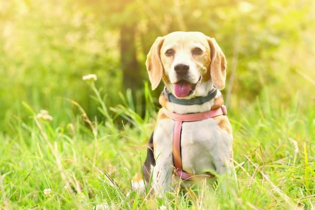claves collar adiestramiento perros